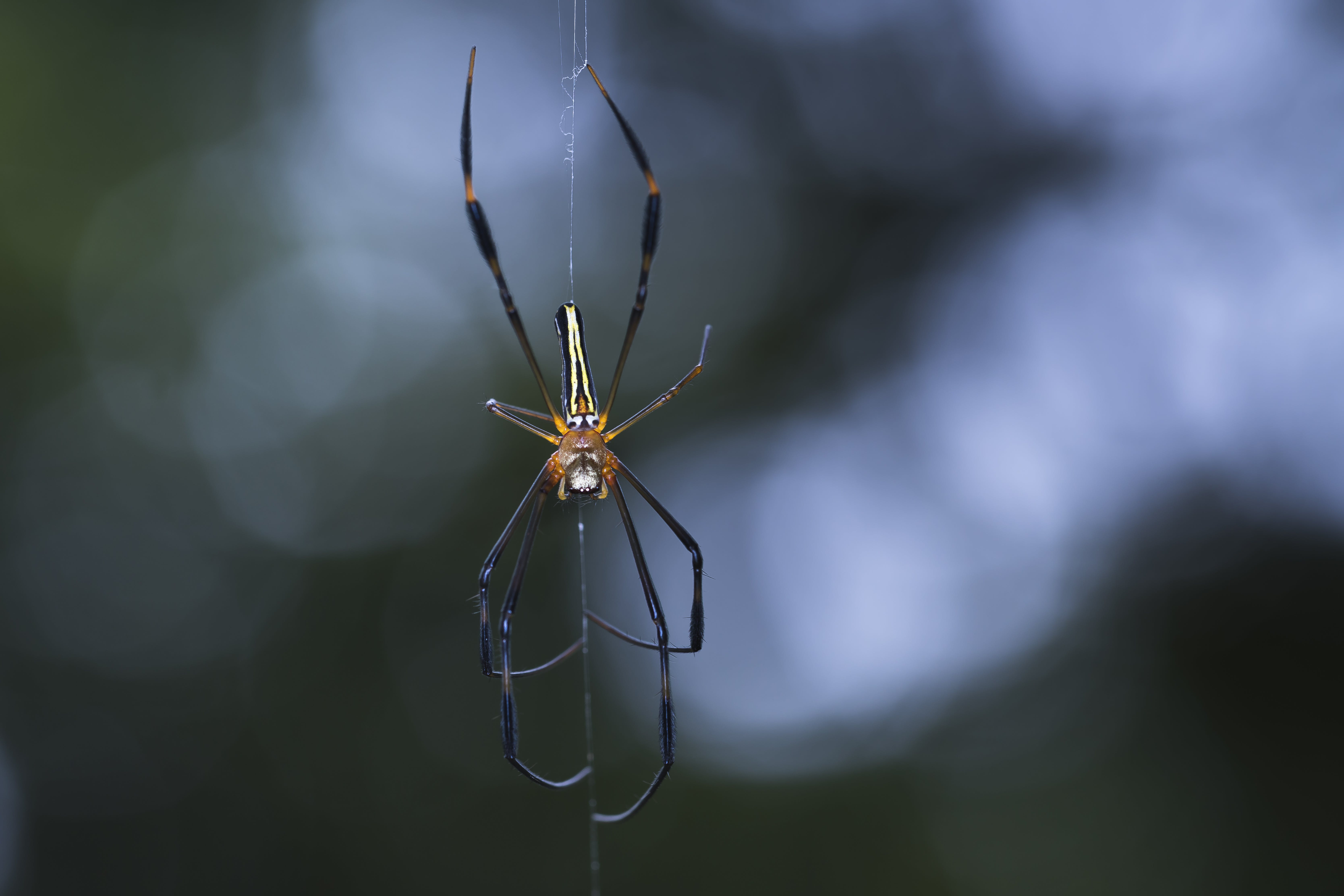 Close-up Photography Of Spider