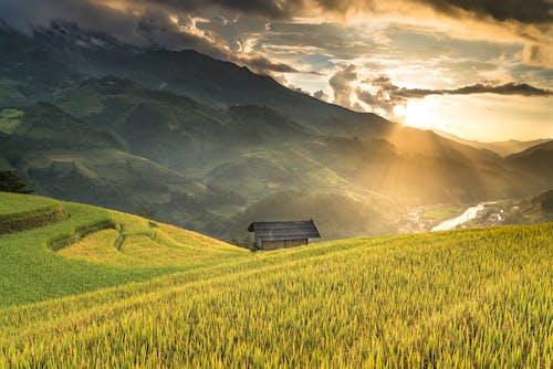 Foto d'estoc gratuïta de a l'aire lliure, agricultura, alba, camp