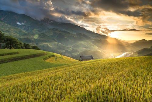 Foto d'estoc gratuïta de agricultura, alba, camp, camps de cultiu