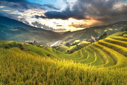 Foto stok gratis agrikultura, bidang, di luar rumah, gunung