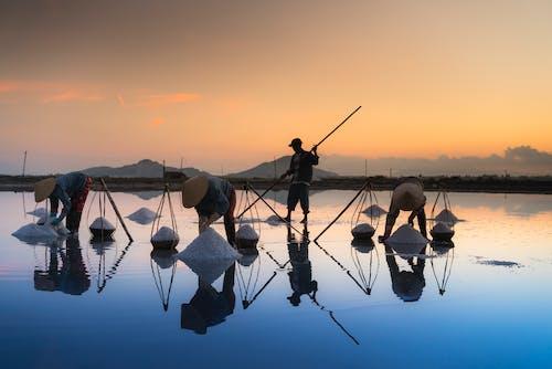 Безкоштовне стокове фото на тему «жнива, з підсвіткою, Захід сонця, люди»
