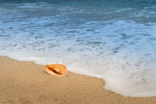 Close-up Photo of Conch Shell Next to Sandy Beach