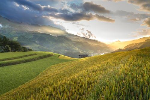 Imagine de stoc gratuită din agricultură, apus, arbori, câmp