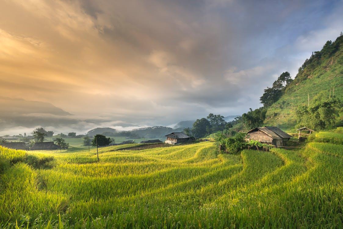 αγρόκτημα, αγροτικός, ανάπτυξη