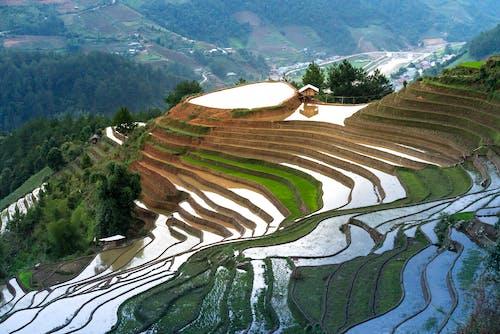 Foto stok gratis agrikultura, air, bagus, bangsa