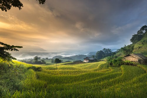 House Surrounded by Rice Field