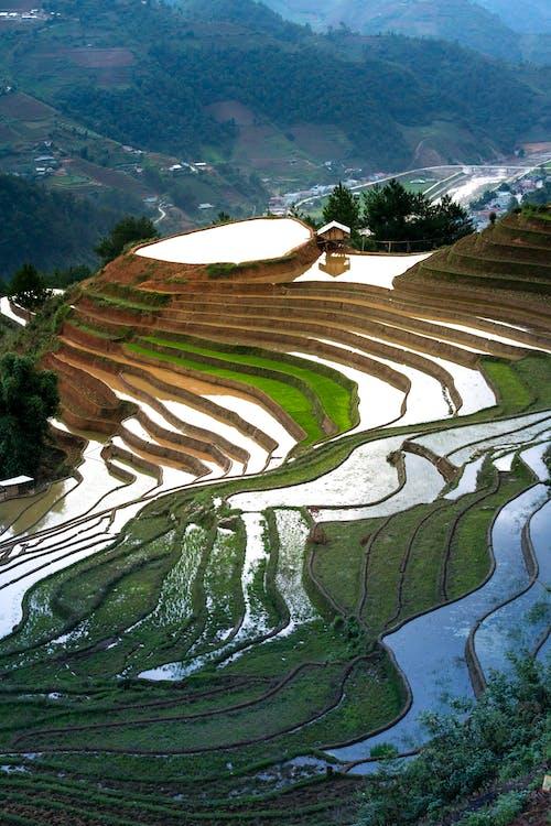Photos gratuites de agriculture, arbres, campagne, chaîne de montagnes