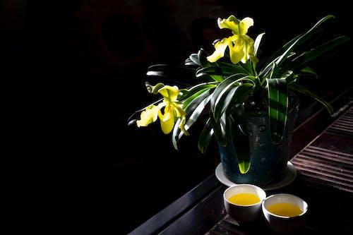 優雅, 增長, 明亮, 植物群 的 免费素材照片
