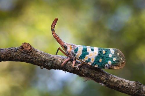 Ảnh lưu trữ miễn phí về ánh sáng ban ngày, cận cảnh, cánh, côn trùng