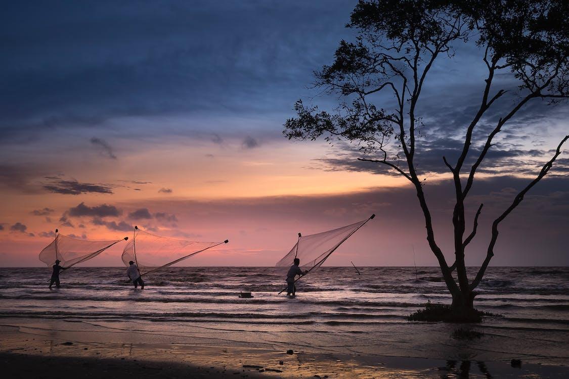 aften, bølger, fiskenet
