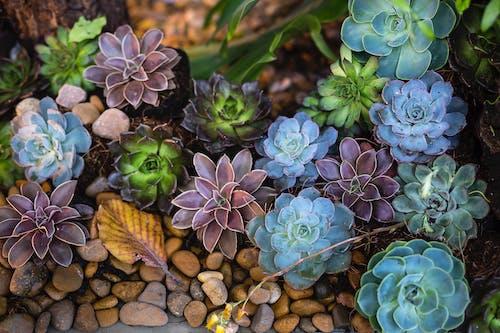 Photos gratuites de botanique, brillant, cailloux, couleur