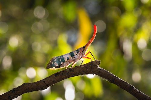 Δωρεάν στοκ φωτογραφιών με bokeh, macro, άγρια φύση, άγριος