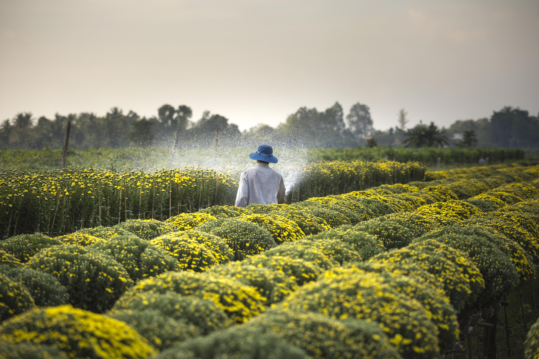 Man Wearing Blue Hat Spraying Yellow Flowers on Field