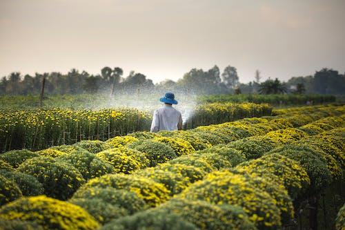 Foto profissional grátis de agricultura, água, ao ar livre, área