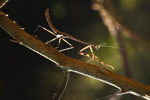 Fotobanka sbezplatnými fotkami na tému bezstavovce, detailný záber, hmyz, hnedá