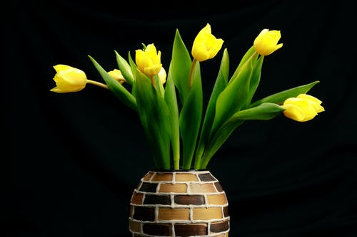 Yellow Tulips Flower