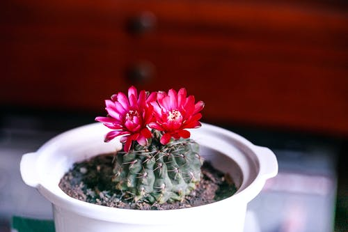 Selective Focus Photography of Cactus With Flowers