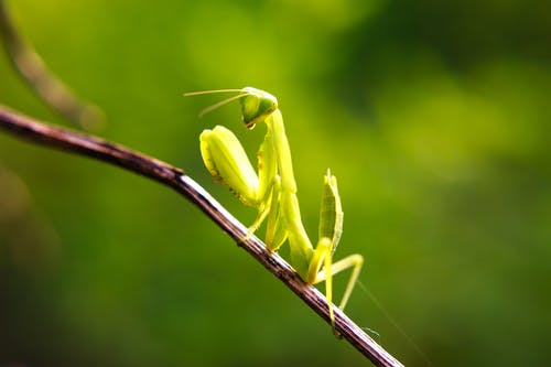 Small Green Insect