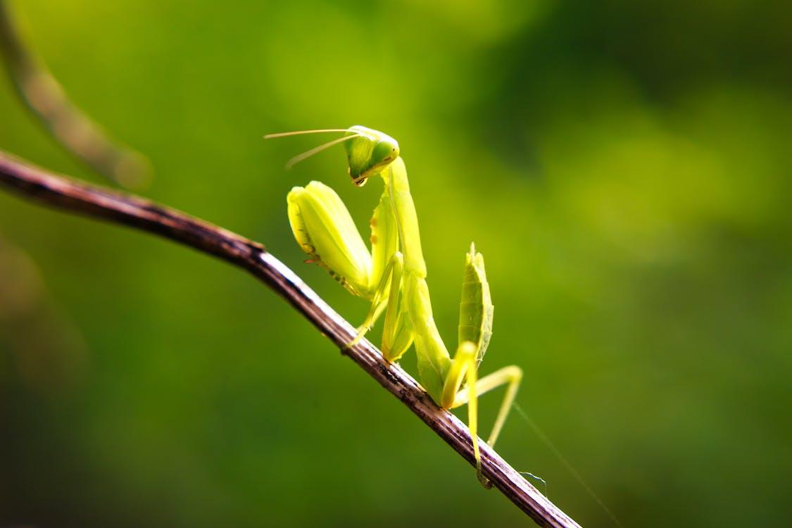 Kleines Grünes Insekt