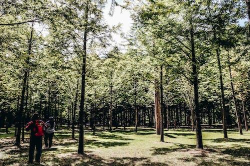 Kostenloses Stock Foto zu bäume, korea