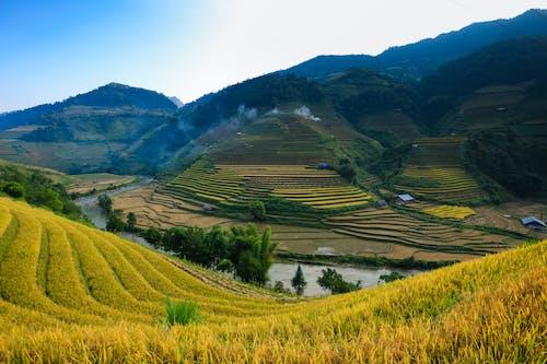 Immagine gratuita di agricoltura, azienda agricola, campagna, campi di riso