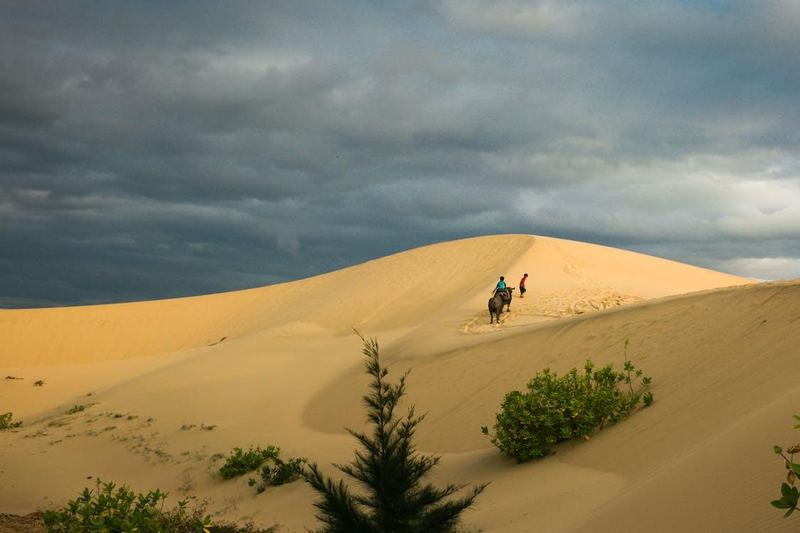 alam, bukit pasir, di luar rumah