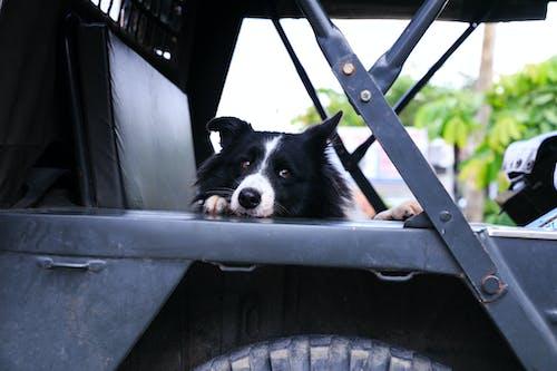 Photos gratuites de adorable, animal de compagnie, chien, fourrure