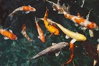 water, animals, swimming