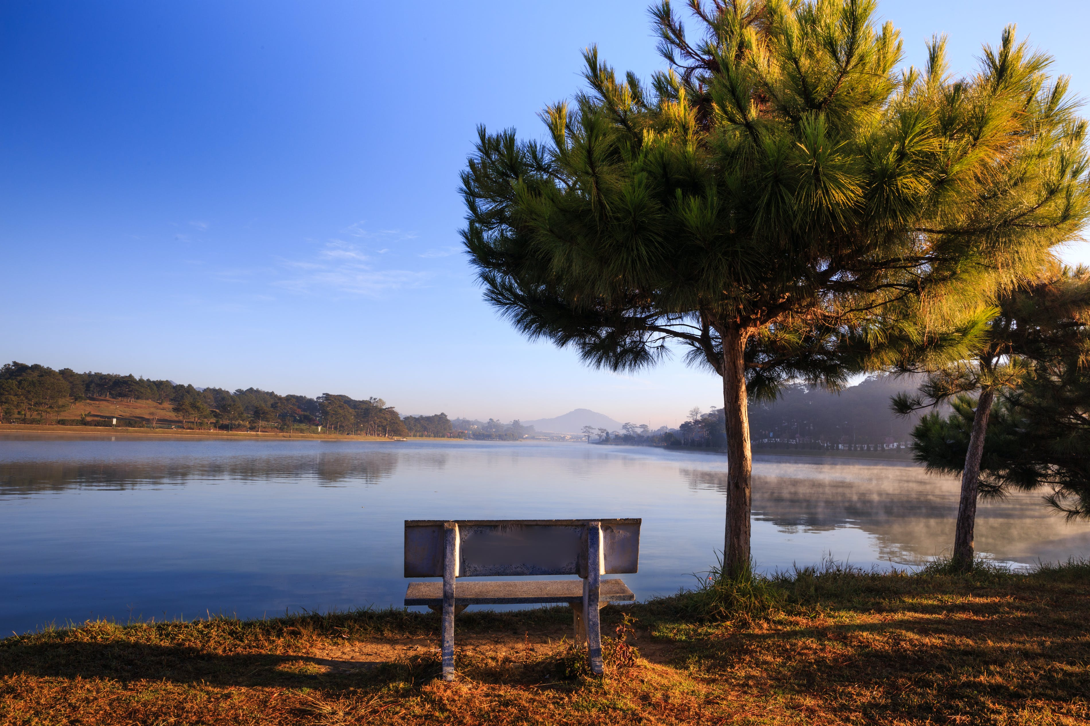 White Wooden Bench Near Tree and Body of Water