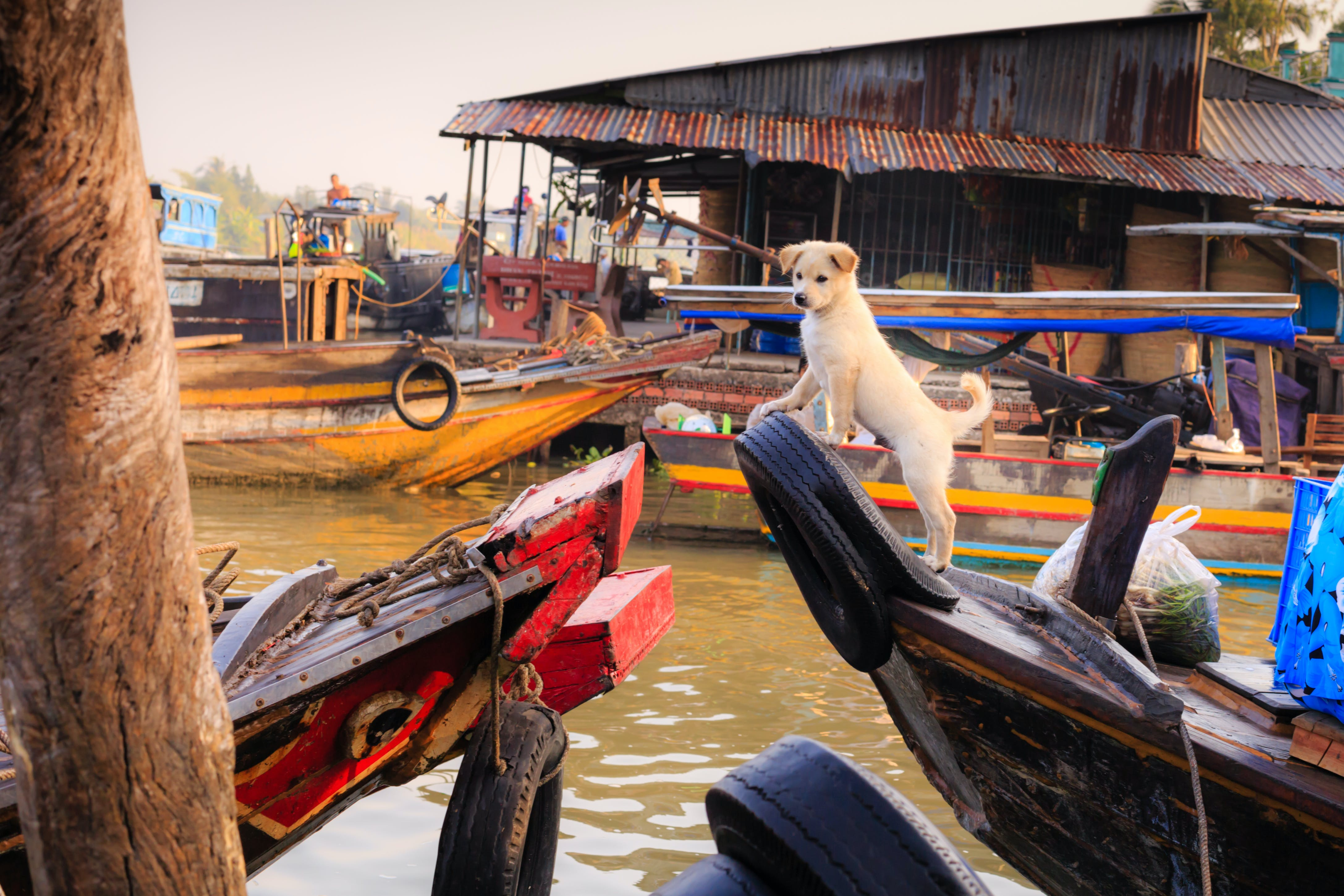 White Puppy on Boat