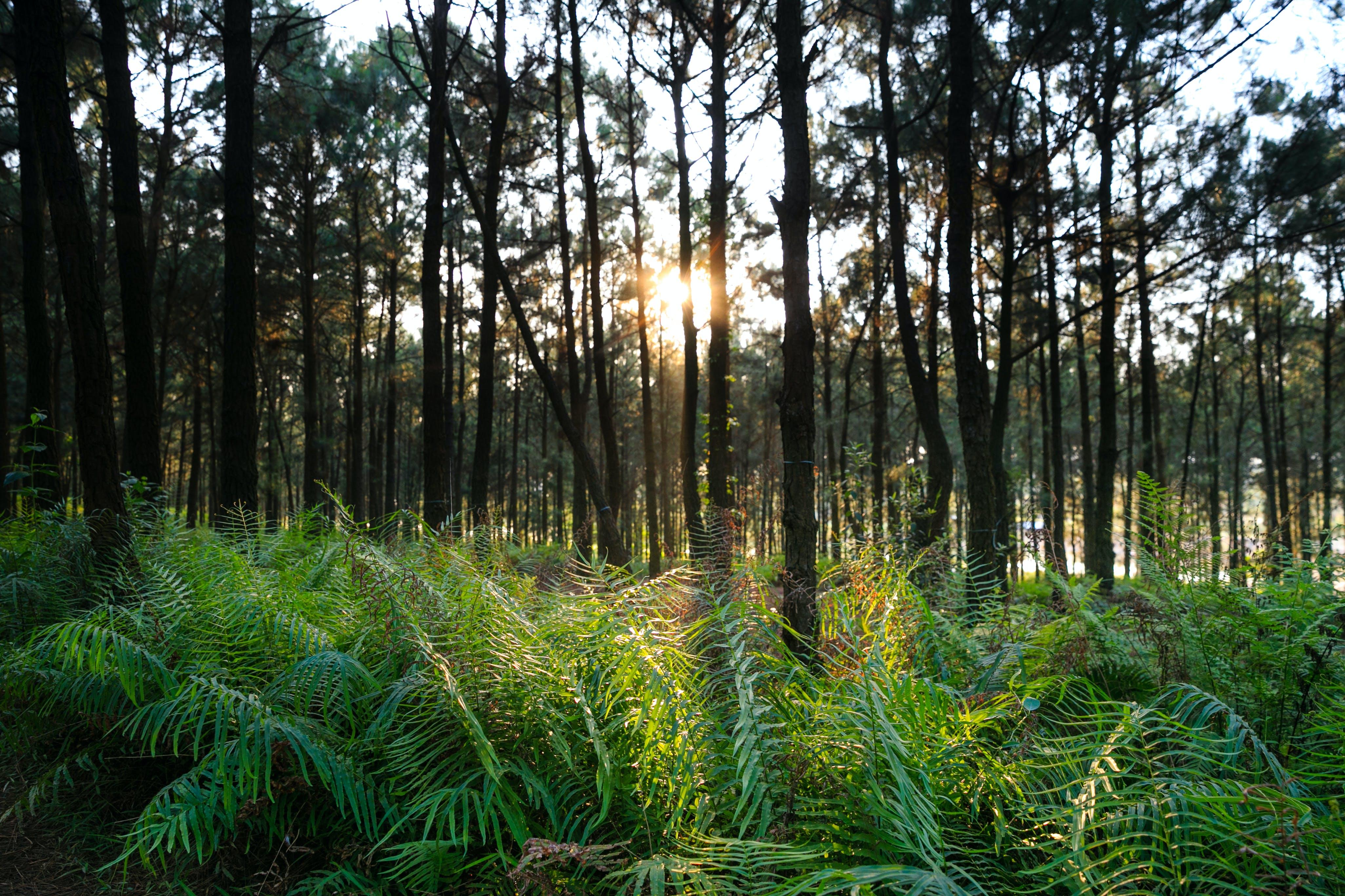 Imagine de stoc gratuită din arbori, arbori veșnic verzi, codru, conifer