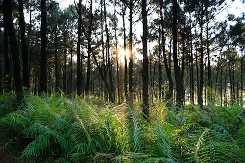 Green Ferns in Forest Floor