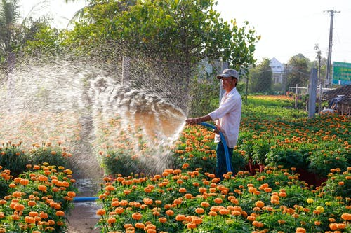 Gratis lagerfoto af blomster, flora, gård, have