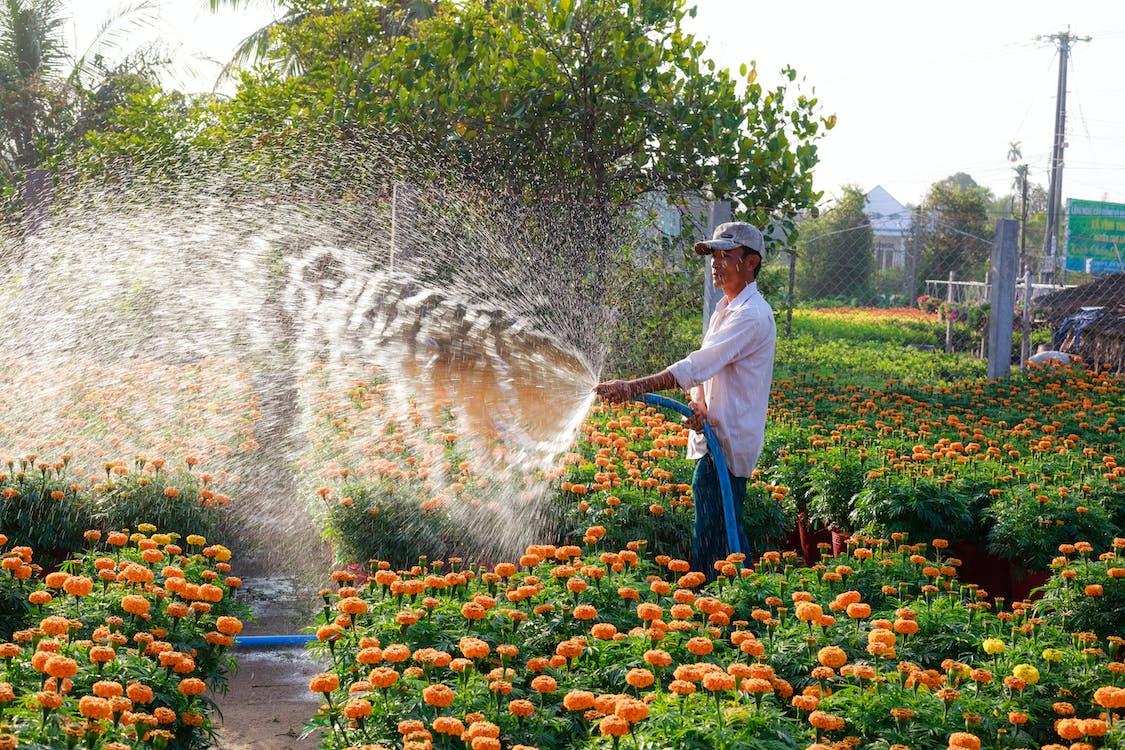 Man Spraying Water on Orange Flowers