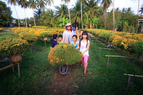 Darmowe zdjęcie z galerii z dorosły, drzewa, dzieci, flora
