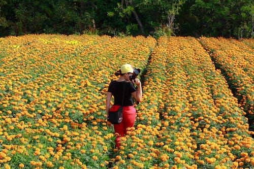 คลังภาพถ่ายฟรี ของ การเกษตร, การเดิน, ช่างภาพ, ดอกไม้