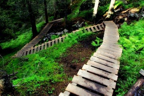 Foto d'estoc gratuïta de bosc, passar per, verd