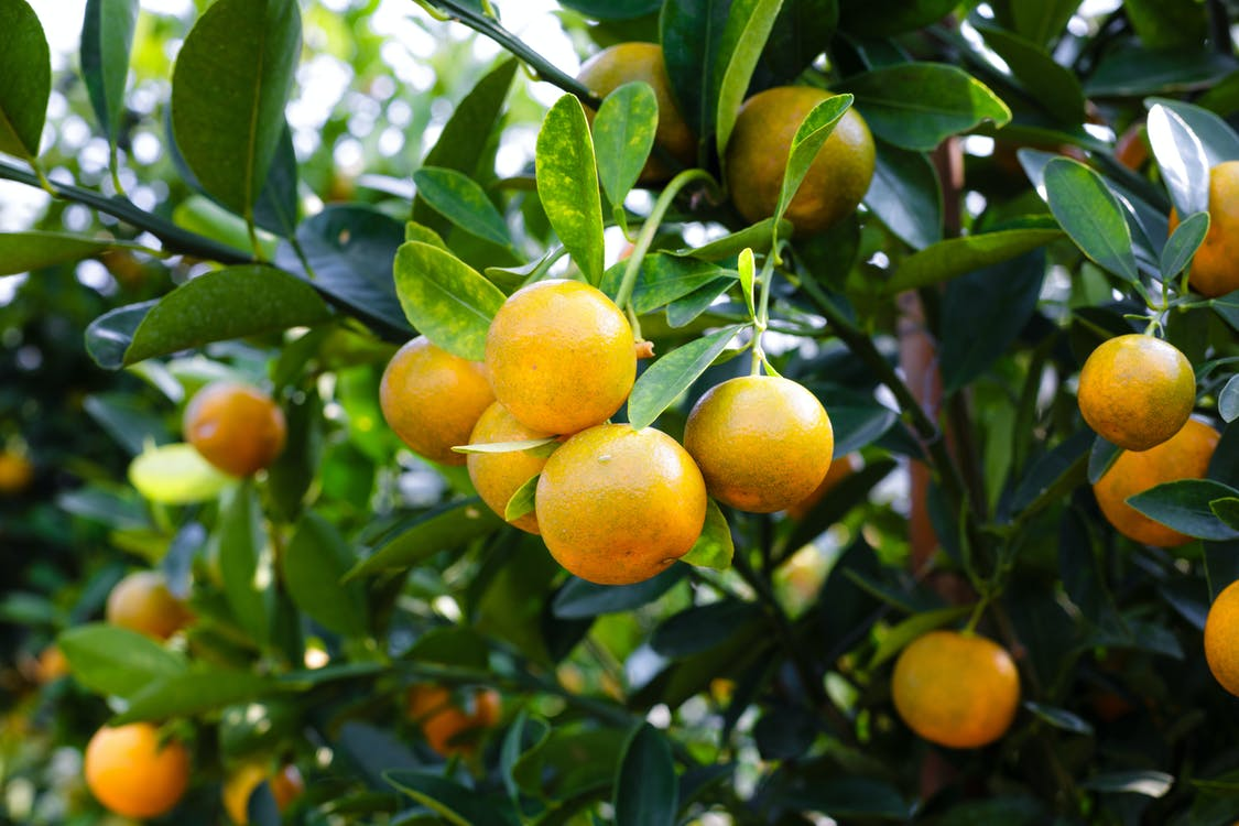 Mandarin Fruit
