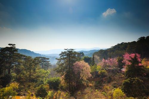 Ingyenes stockfotó fák, festői, környezet, Látvány témában