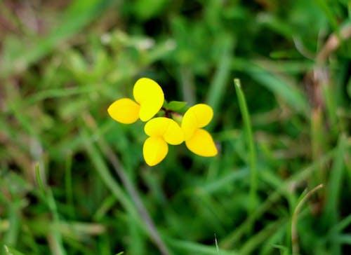 Foto d'estoc gratuïta de flor, flors grogues, groc, verd