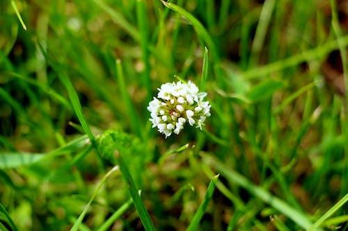 Foto d'estoc gratuïta de petit, petita flor, verd