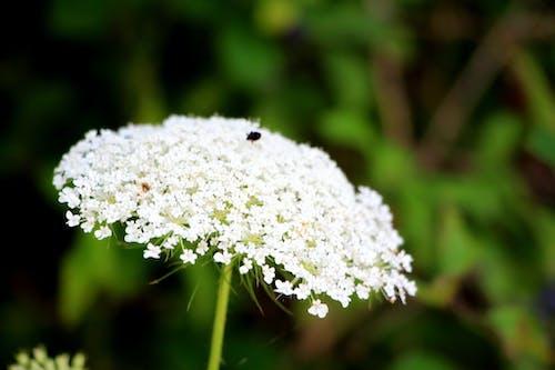 Foto d'estoc gratuïta de flor blanca, verd