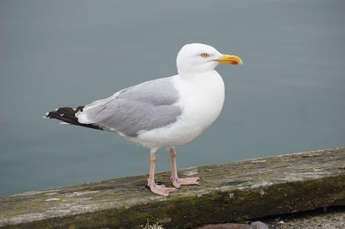 Gros Plan, De, Oiseau
