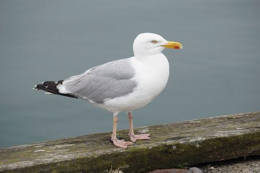 Kostenloses Stock Foto zu holz, meer, vogel, wasser