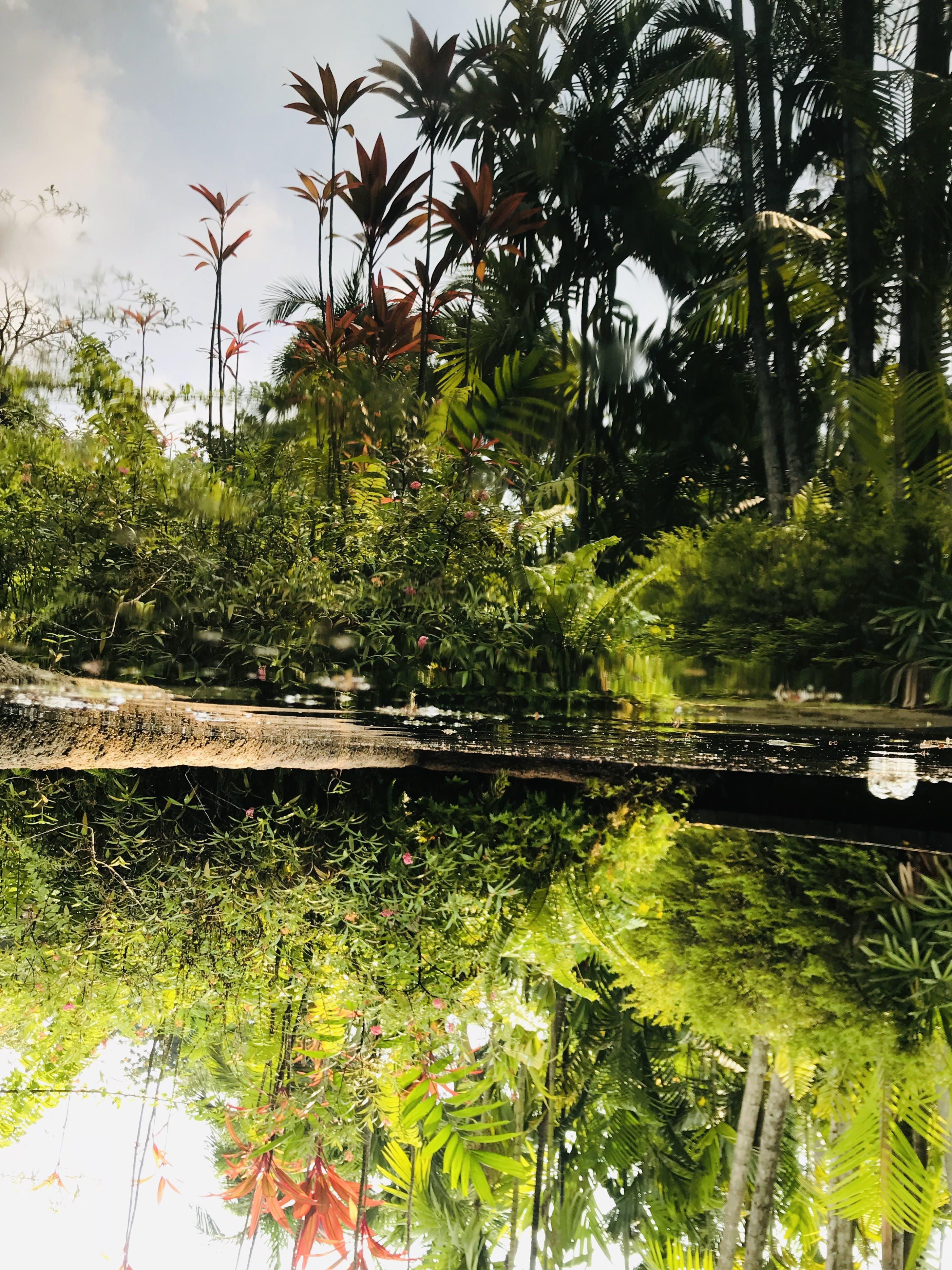 Free stock photo of plants, singapore