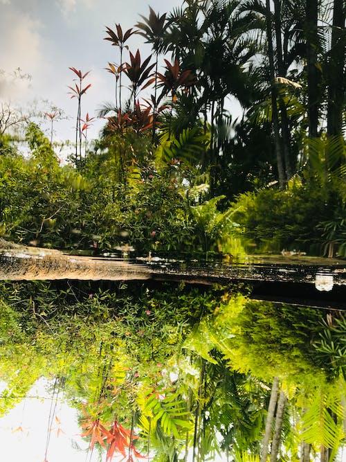 Základová fotografie zdarma na téma rostliny, singapur