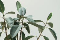 Plant Images