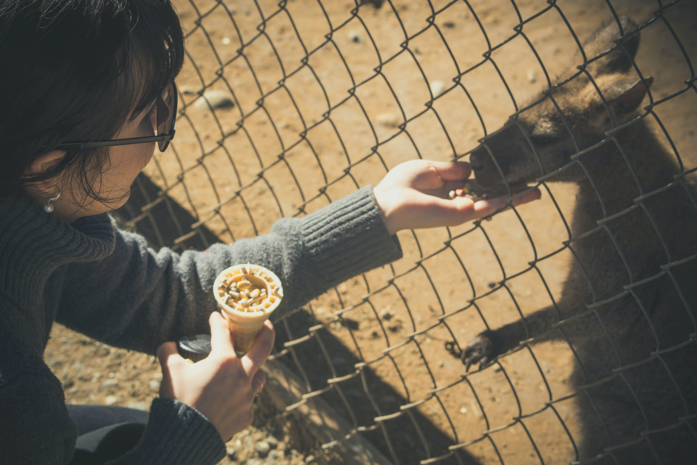 Woman Feeding Kangaroo