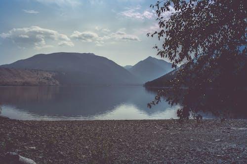 Foto d'estoc gratuïta de aigua, alba, arbres, boira