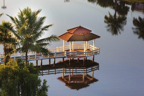 Immagine gratuita di acqua, acque calme, alberi, albero di cocco